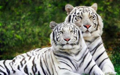 Determinismo Geográfico y Especies Animales