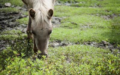 Especies Animales y su Adaptación al Medio Físico